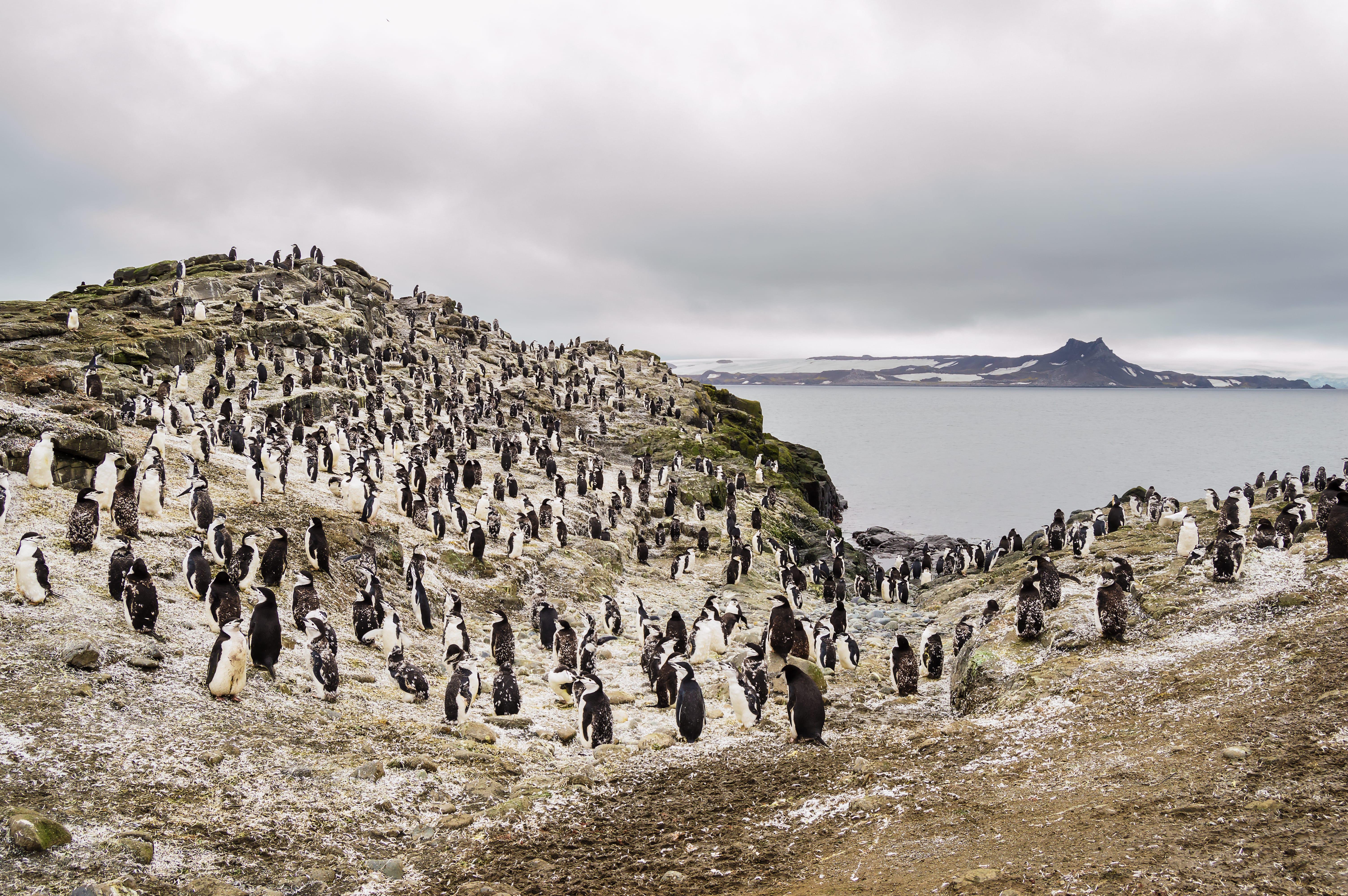 una colonia de pingüinos en la isla de barientos en la Antártida