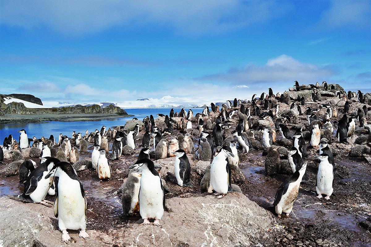 Verano antártico